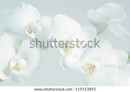 Close-up of white orchids on light background. Toned image. - stock photo