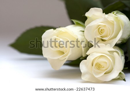 Close up of white rose buds against white background