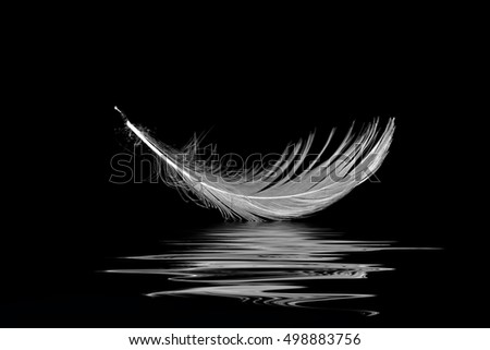 close up of white seagull feather on black with water reflection