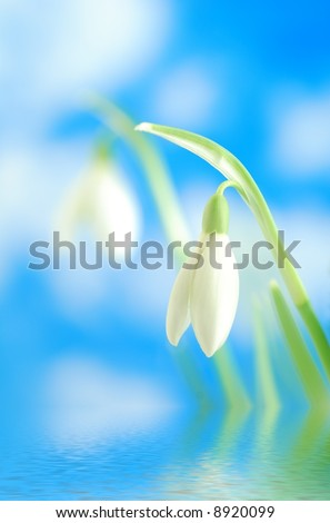 Close-up of white snowdrop against blue sky with  clouds reflected in water - stock photo