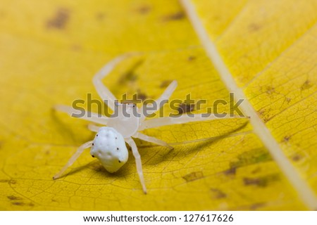 Close up of white spider on leaf