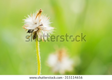 close up of Wild Daisy with abstract color and shallow focus - stock photo
