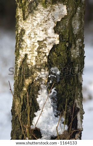 close up of winter tree - stock photo