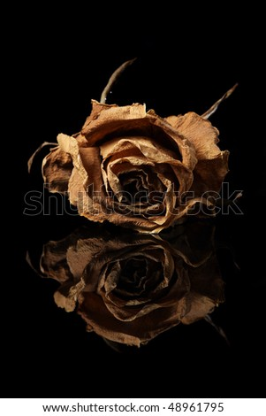 Close up of withered rose with reflection over black background.