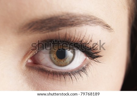 close up of womans brown eye with false eye lashes - stock photo