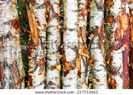 Close up of wooden logs from birch tree. - stock photo