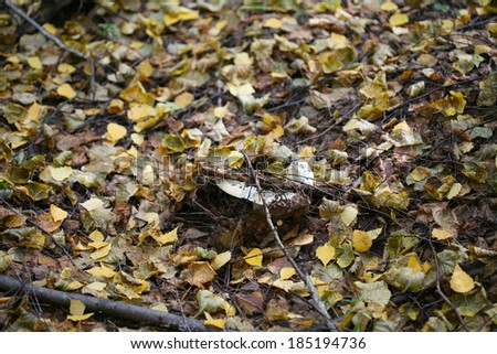 close-up of yellow and brown fallen leaves in autumn forest - stock photo