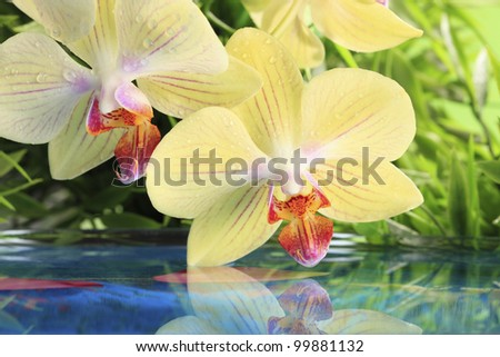Close-up of yellow orchid reflected on the water (shallow focus) - stock photo