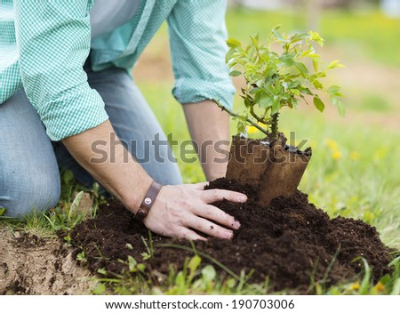 Close-up of young man's hands planting small tree in his backyard garden - stock photo