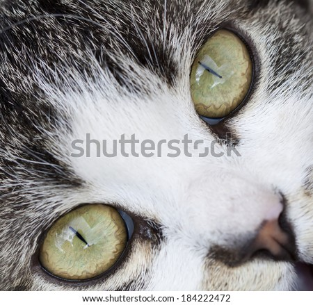 Close up on a cat's green eyes