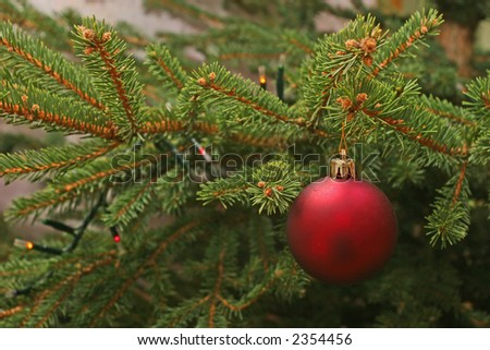 Close up on a Christmas tree. Red christmas ornament hanging on a fir tree branch.