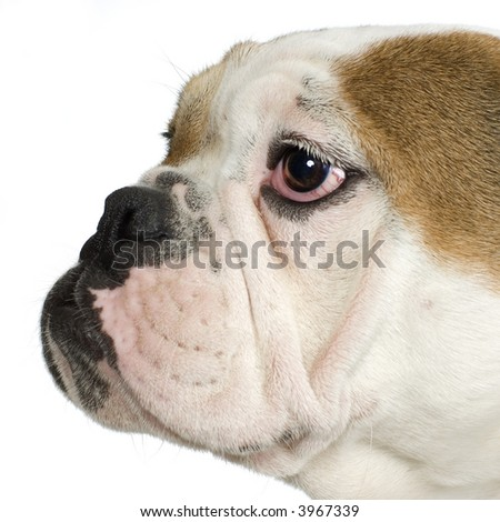 close-up on a  in front of a white background - stock photo