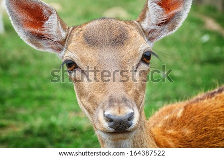 Close-up on baby deer in wild nature - stock photo