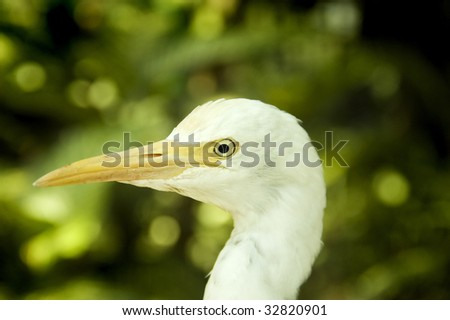 Close up on egret head. - stock photo