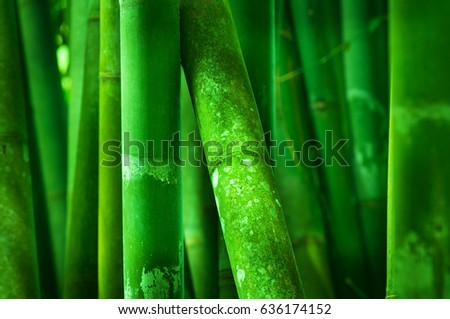 Close up on green bamboo grove
