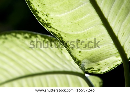 Close-up on green leaves