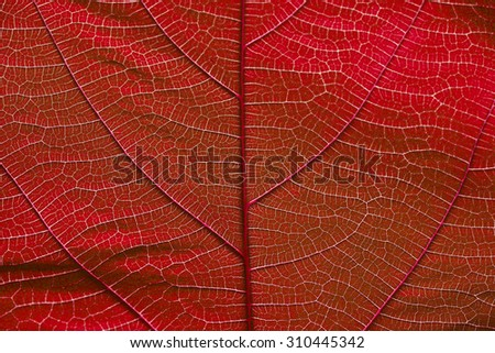 Close up on red leaf texture (background)