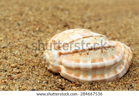 Close up on snail shell in a sea beach