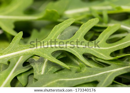 close-up on the heap of rucola - macro