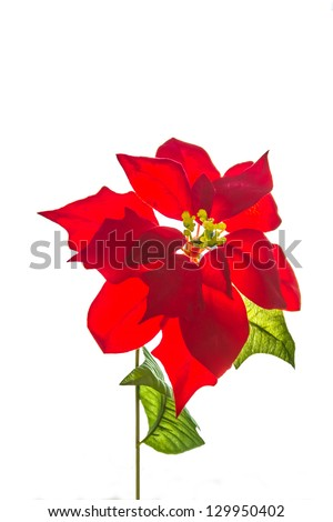 Close up on the red flower