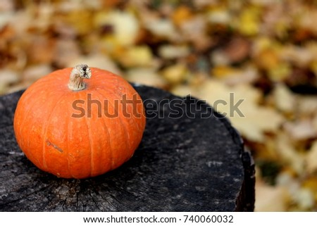 Close up orange pumplin, isolated on black wooden background on autumn leaves texture, card for halloween and thanksgiving holidays