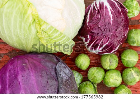 Close up overhead view of a selection of different fresh crucifies including green cabbage, red cabbage, radicchio and brussels sprouts for use as ingredients in healthy vegetarian cuisine - stock photo