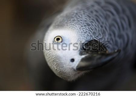 close up parrot - stock photo