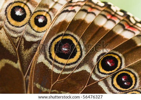 Close up part of butterfly wing from a blue Morpho - stock photo