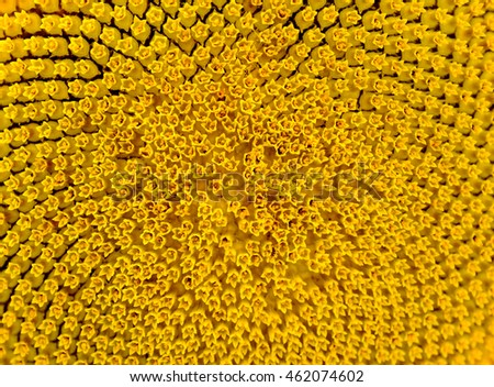 Close-up Pattern of Beautiful Bright Sunflower. Summer Flower Background