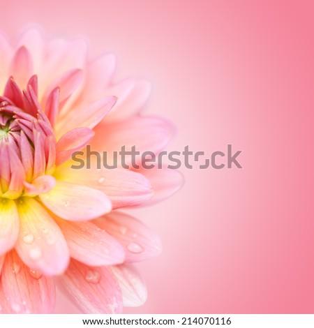 Close up petal of  pink macro flower  - stock photo