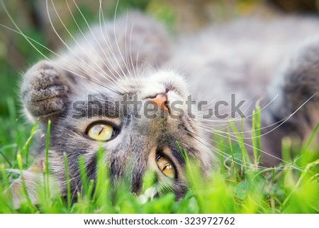 Close up photo from a cute domestic cat playing outdoor - stock photo
