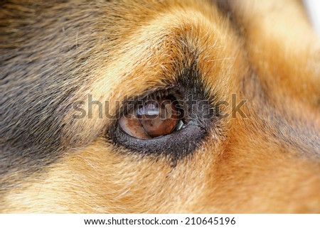 Close up photo of a rottweiler's eye - stock photo