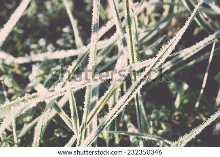 close up photo of frosty morning grass, chilling morning in fall. Vintage effect. - stock photo