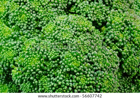 close-up photo of green broccoli flowers - stock photo