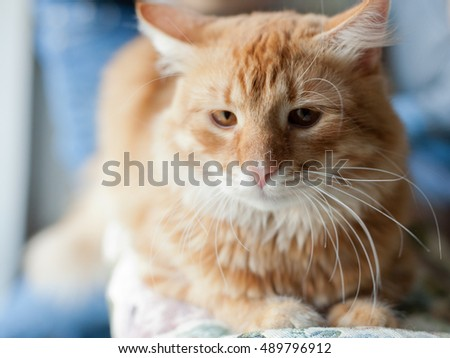 Close up photo of red cat with green eyes looking straight towards camera