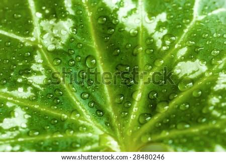 close up photo raindrops on green leaf - stock photo