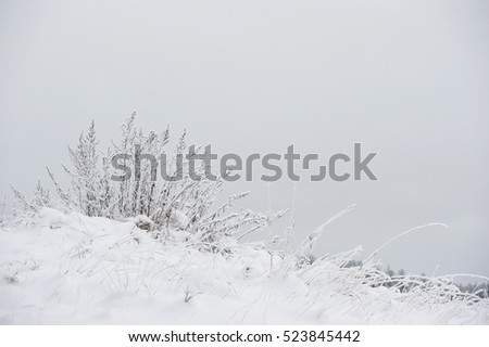 Close up photograph of snow covered details of the field.
