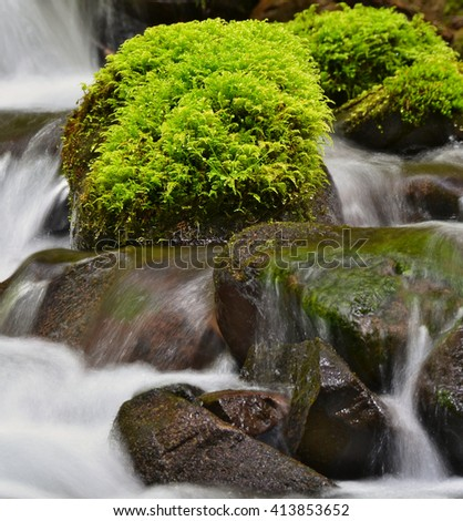 Close up picture of green moss on rocks  - stock photo