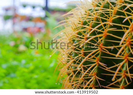 close up picture thorns of cactus and green natural background  - stock photo