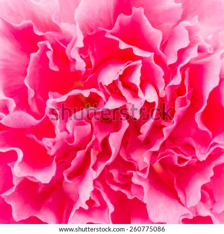 Close up Pink flower background