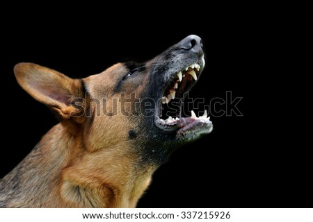 Close-up portrait angry dog on dark background - stock photo
