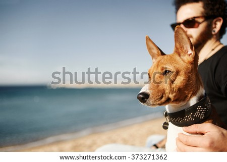 Close up portrait dog breed Basenji sitting at sand and looking in camera enjoying sun in Barcelona. In the background beautiful young man with tattoos wearing black t-shirt and jeans - stock photo