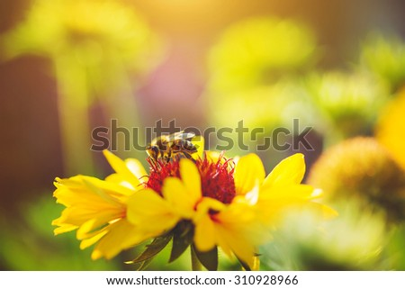 Close-up portrait of a bee on a yellow flowers. - stock photo