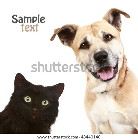 Close-up portrait of a cat and dog. Isolated on white background - stock photo