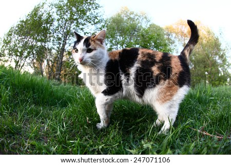 close-up portrait of a cat in the garden in spring  - stock photo