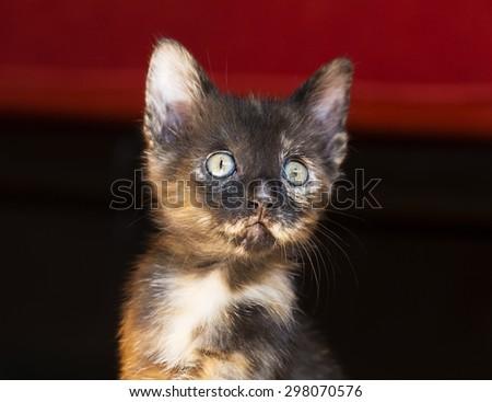 Close-up portrait of a cute little kitten - stock photo