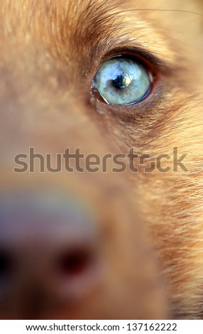 Close up portrait of a dog - stock photo