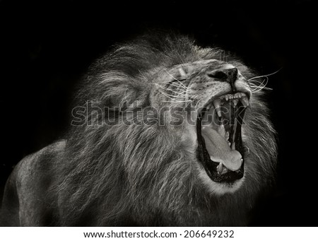 close up portrait of a fantastic lion
