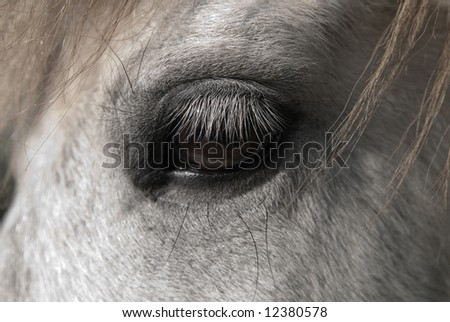 Close up portrait of a horse detailing its eye - stock photo