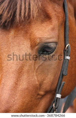 Close up portrait of a horse face - stock photo